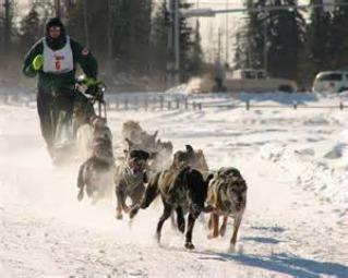 Alaska adventures,dogsledding,AnchorageMemories.com